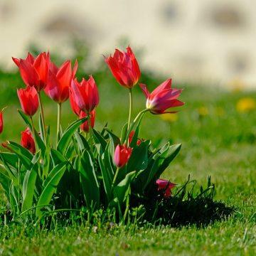Rośliny, które zasadzisz jesienią, zaskoczą Cię na wiosnę