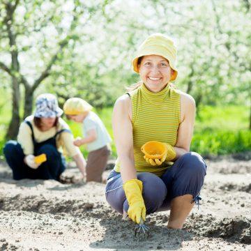 Kiedy najlepiej rozpocząć wysiewanie ogrodu?