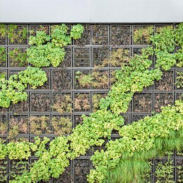 Ogród wertykalny. Co to takiego i jak zbudować?