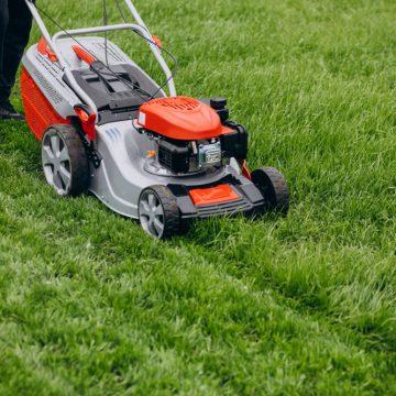 Renowacja trawnika po zimie