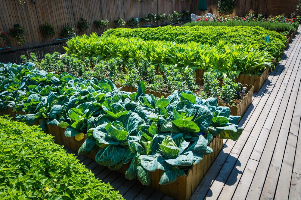 warzywa w donicach