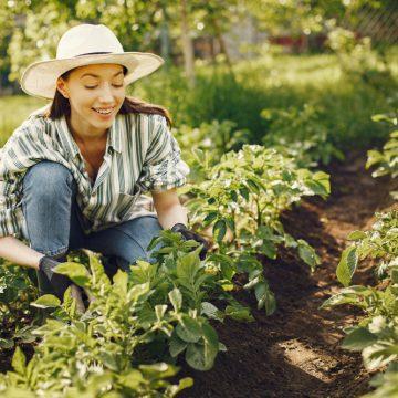 Lato w ogrodzie. Jakie prace należy wykonać?
