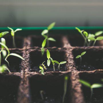 Jak zapewnić roślinom odpowiednie składniki mineralne?