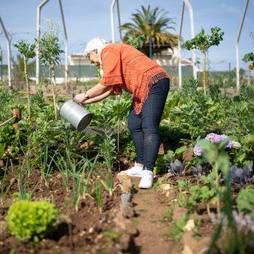 Jak ogrodzić ogród?